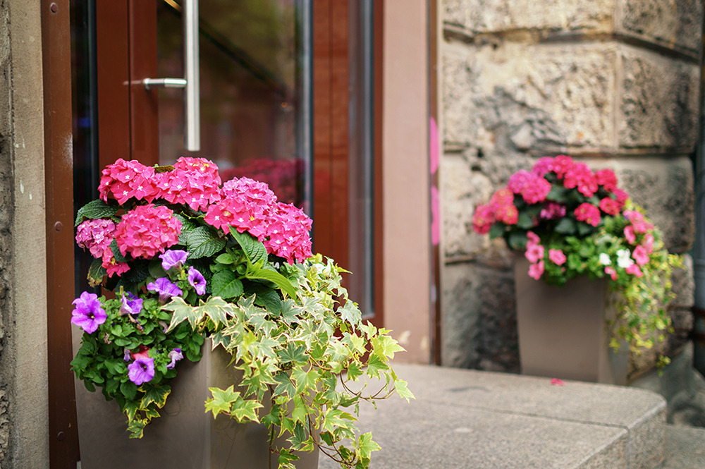 plants and flowers in pots on a doorstep leading to a garden or patio.